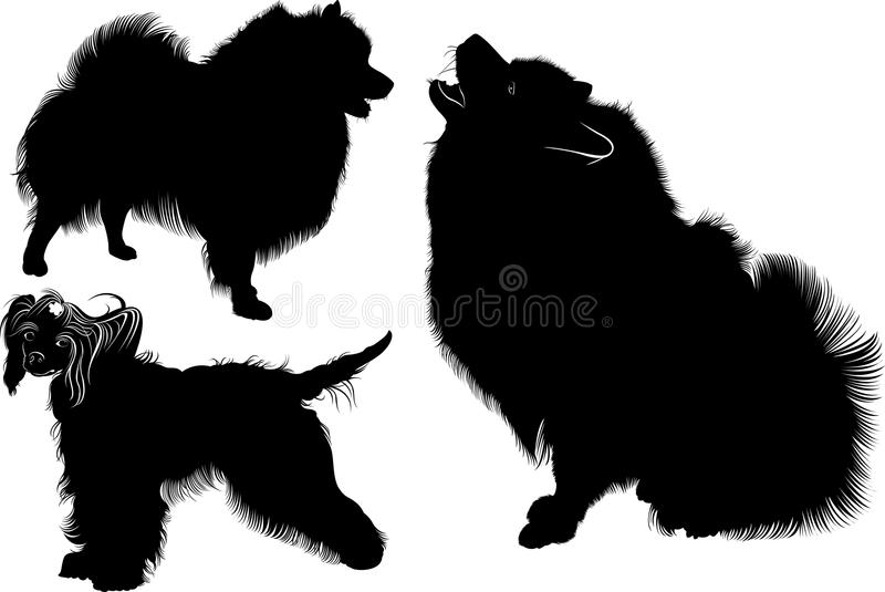Silhueta preta do spitz Vetor Isolado no fundo branco Cão do Spitz Cão com crista chinês cães Chinês Crested Collectio ilustração stock