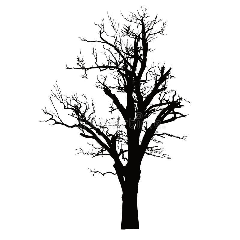 Silhueta realística de uma árvore inoperante com ramos secos ilustração stock