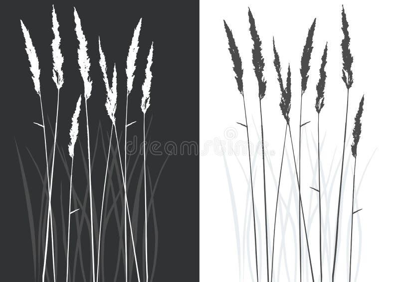 Silhueta real da grama ilustração stock