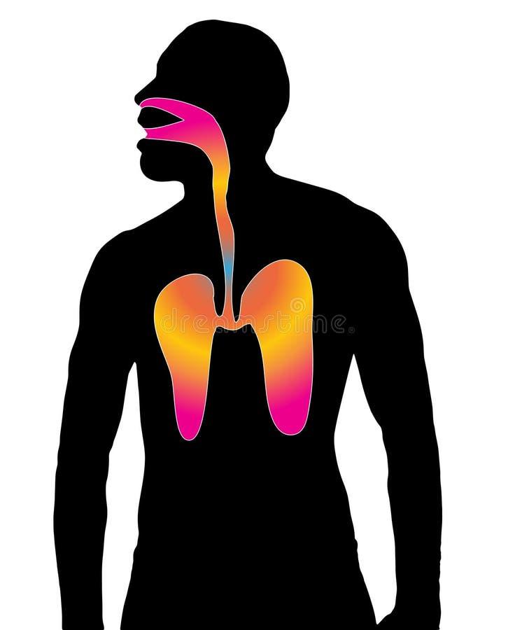 a silhueta respira vias aéreas ilustração stock