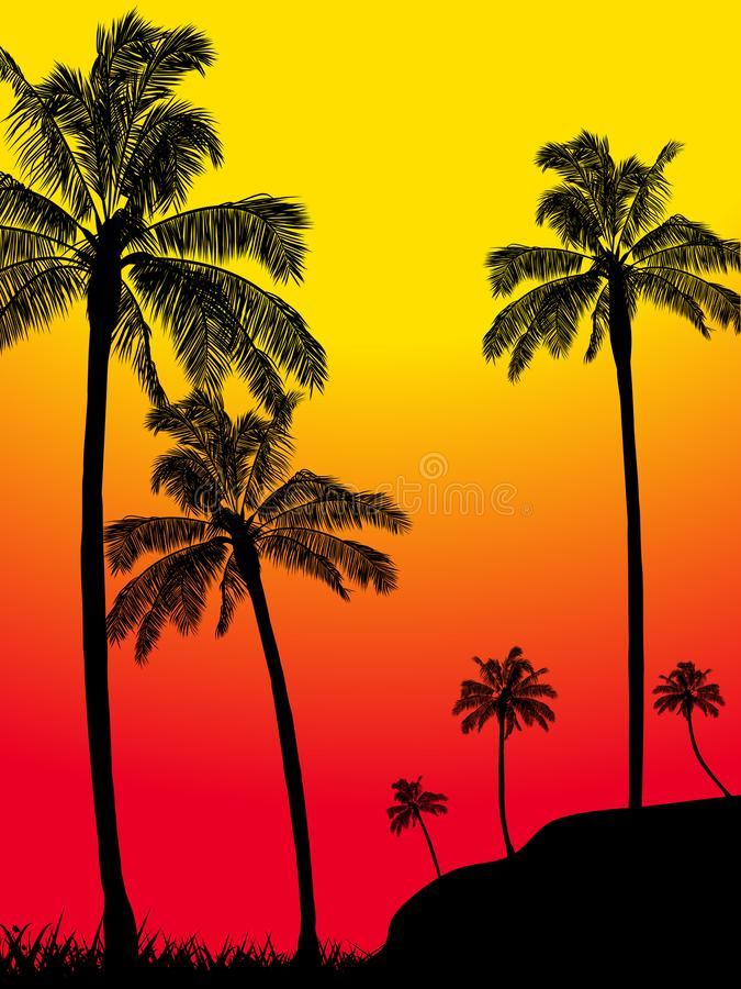 Silhueta tropical da floresta das palmeiras do verão do sumário fotos de stock