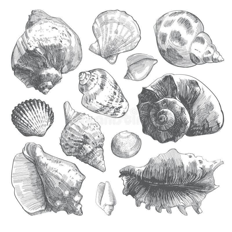 Silhuetas cinzentas da concha do mar da garatuja isoladas no branco ilustração stock