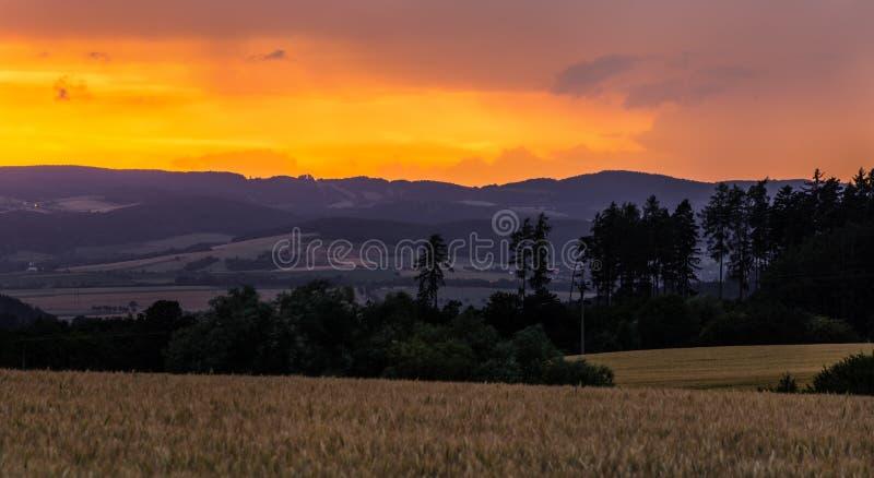 Silhuetas coloridas do por do sol e da árvore fotografia de stock royalty free