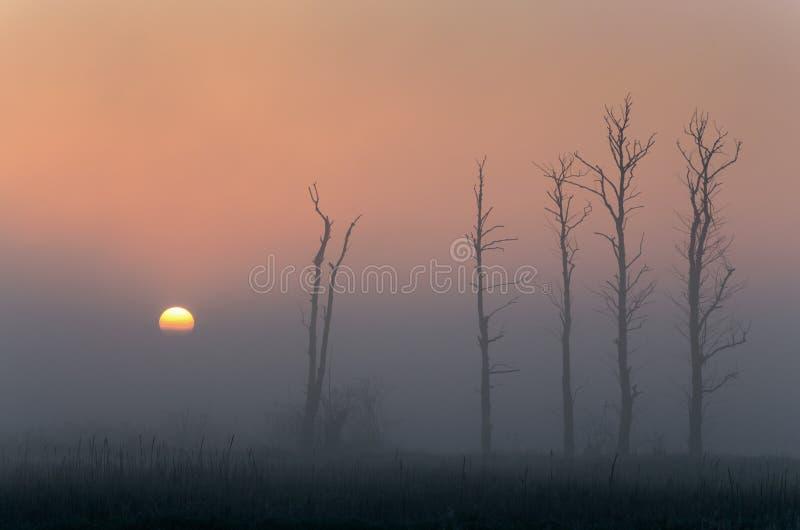 Silhuetas da árvore com nascer do sol foto de stock royalty free