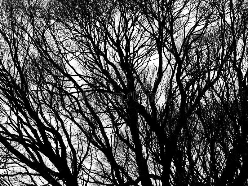 Silhuetas da árvore isoladas imagens de stock