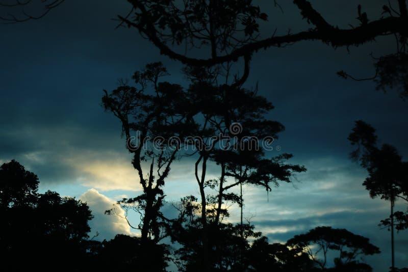 Silhuetas da árvore velha da selva completa com bromeliáceas com um céu vívido no fundo foto de stock royalty free