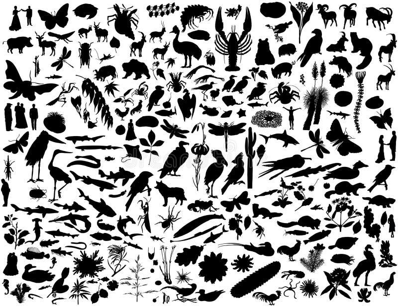 Silhuetas da colagem ilustração do vetor