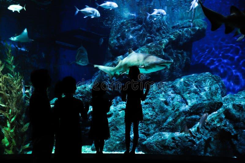 Silhuetas da família com as duas crianças no oceanarium foto de stock royalty free