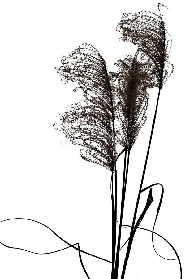 Silhuetas da grama imagem de stock
