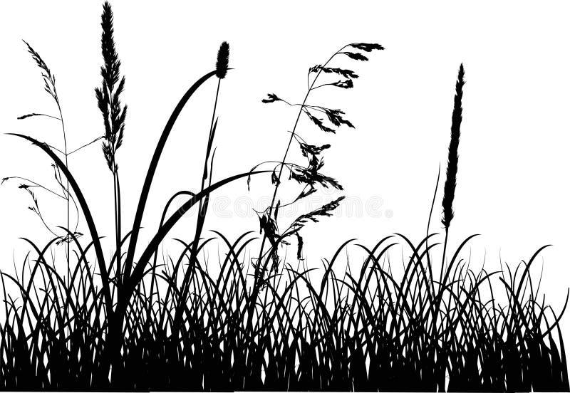 Silhuetas da grama da queda isoladas no branco ilustração do vetor