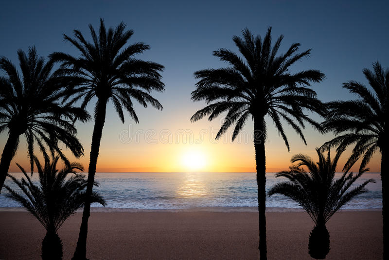 Silhuetas da palmeira fotografia de stock
