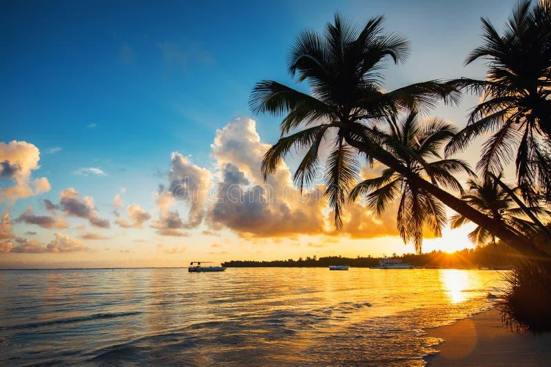 Silhuetas da palmeira na praia tropical, Punta Cana, Domínica imagem de stock royalty free