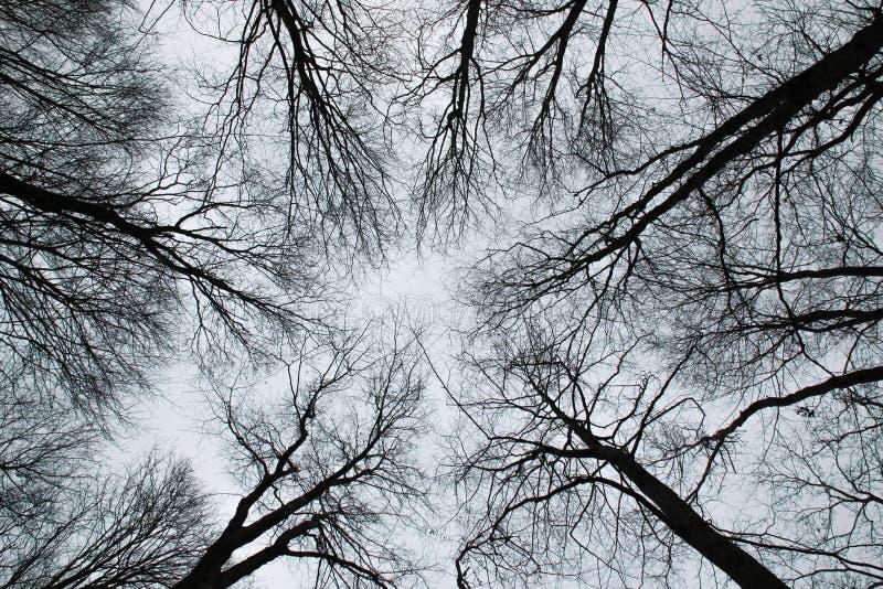 Silhuetas das árvores da terra ao céu foto de stock