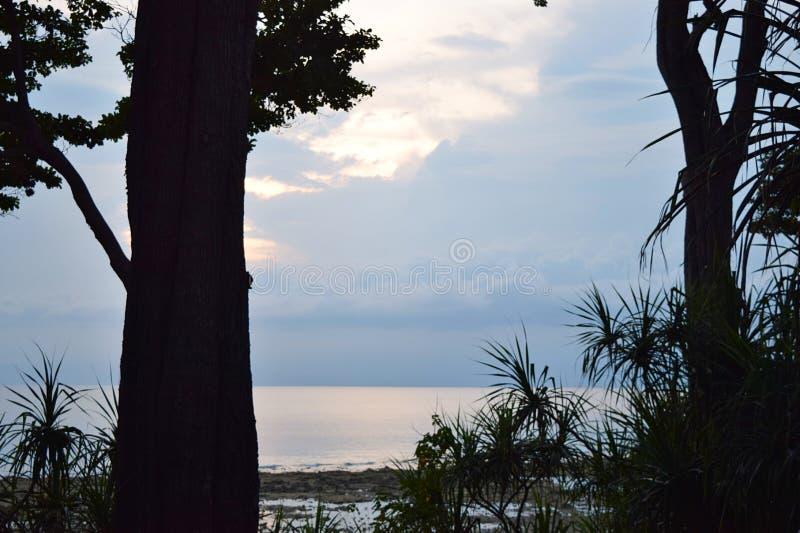 Silhuetas das árvores, dos troncos, das folhas, e da grama contra o fundo das nuvens e do mar - abstraia o fundo natural foto de stock royalty free