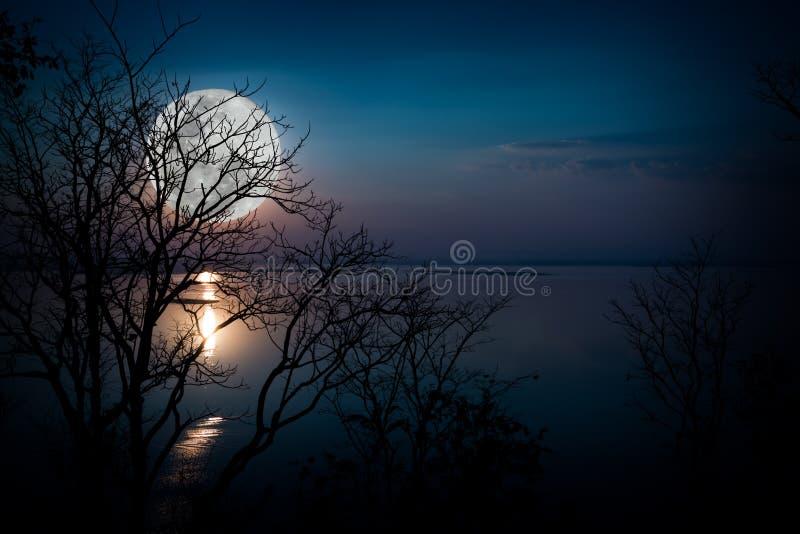 Silhuetas das madeiras e do moonrise bonito, Lua cheia brilhante wo fotografia de stock royalty free
