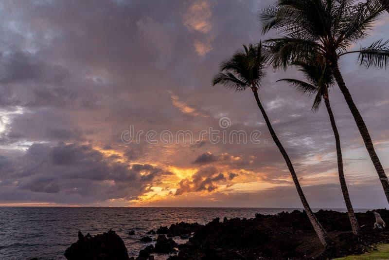 Silhuetas das palmeiras em uma praia da ilha grande durante a hora dourada imagem de stock