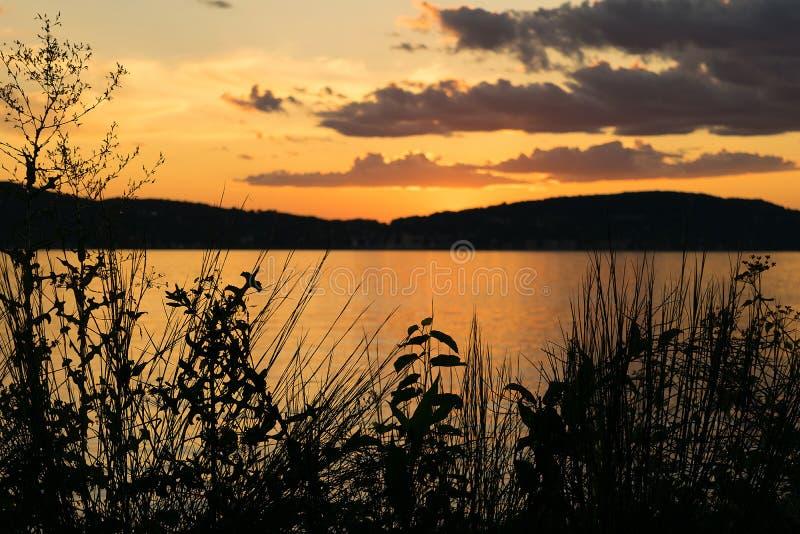 Silhuetas das plantas no primeiro plano, como o por do sol adiciona um fulgor dourado bonito ao céu de nivelamento, Hudson River foto de stock royalty free