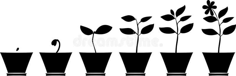 Silhuetas das plantas no vaso de flores ilustração do vetor