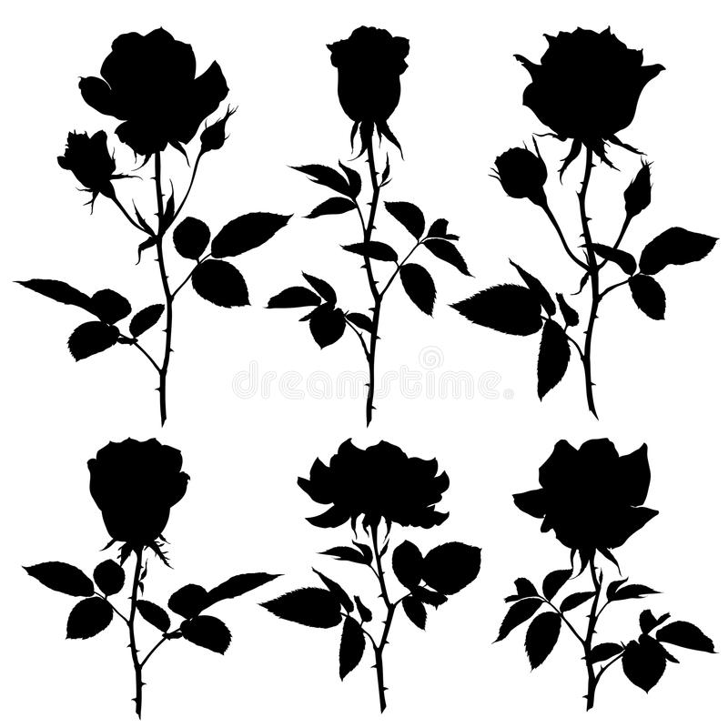 Silhuetas das rosas Grupo de silhuetas do vetor no fundo branco ilustração stock