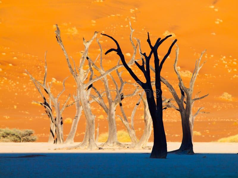 Silhuetas de árvores inoperantes em Deadvlei, perto de Sossusvlei, dunas vermelhas do deserto de Namib, Namíbia, África imagem de stock