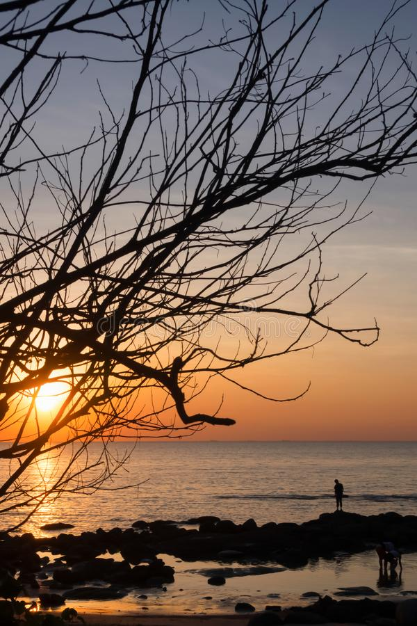 Silhuetas de árvores inoperantes na praia e nos céus coloridos em um fundo do por do sol foto de stock royalty free