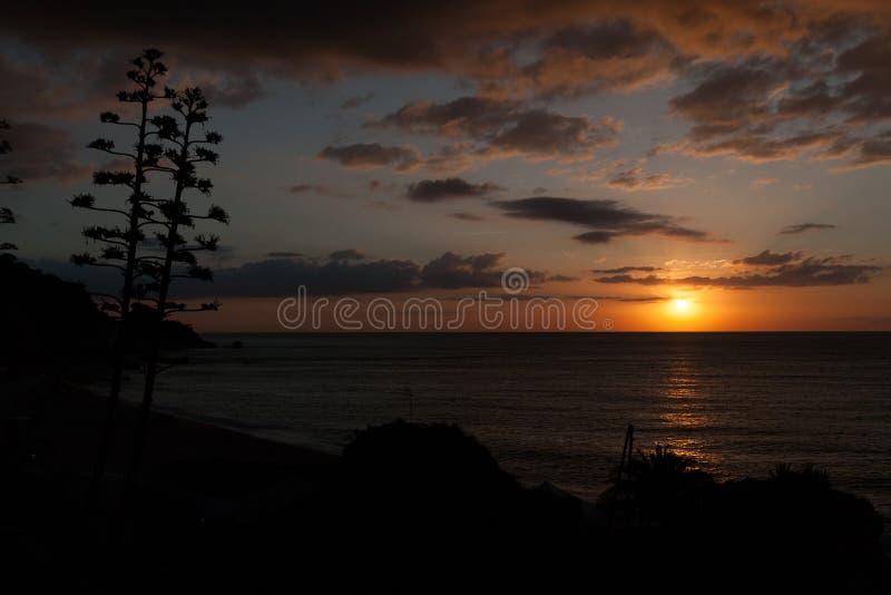 Silhuetas de agaves de florescência no por do sol fotografia de stock royalty free