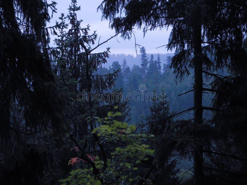 Silhuetas de coroas da árvore no fundo de nivelamento do céu imagens de stock royalty free