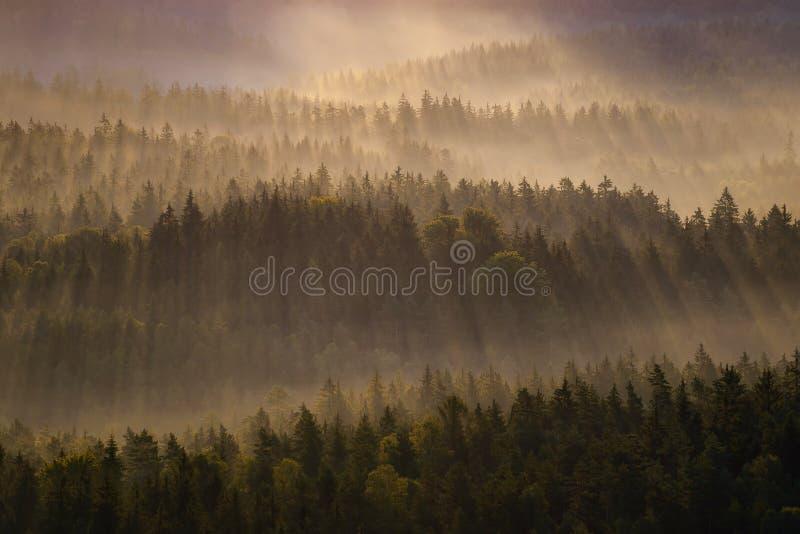 Silhuetas de Kleiner Winterberg, Suíça saxão, Alemanha fotografia de stock