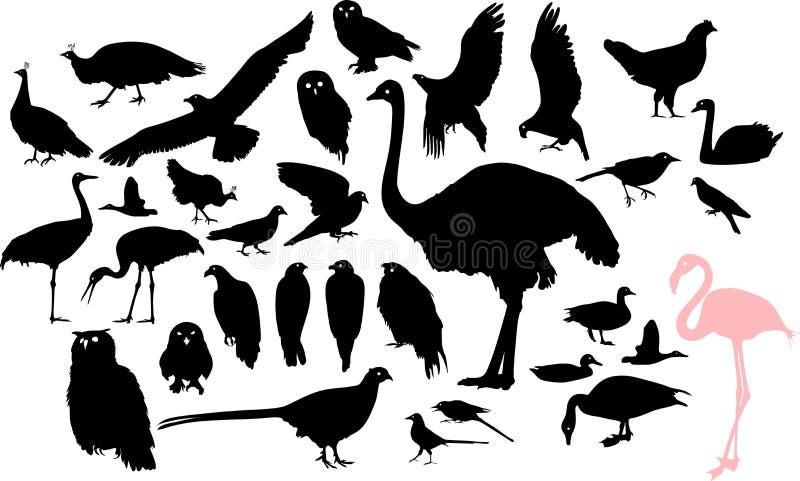 Silhuetas de pássaros diferentes ilustração stock