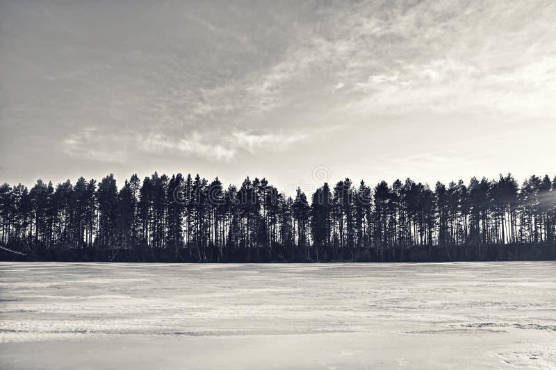 Silhuetas de uma paisagem bonita do inverno fotos de stock royalty free