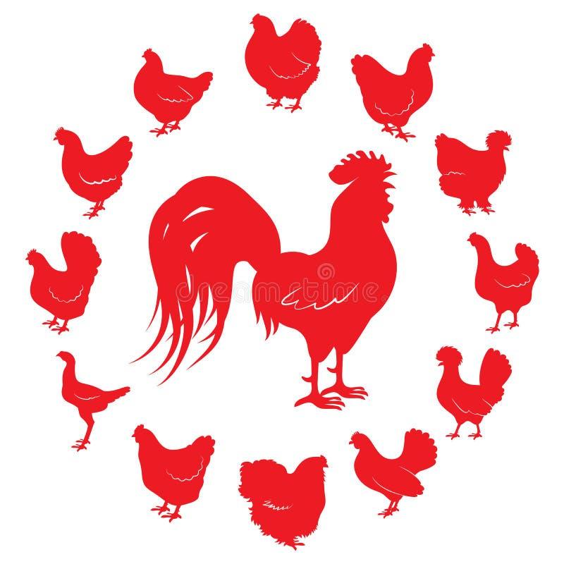 Silhuetas do galo e das galinhas das raças diferentes isoladas em um fundo branco ilustração royalty free
