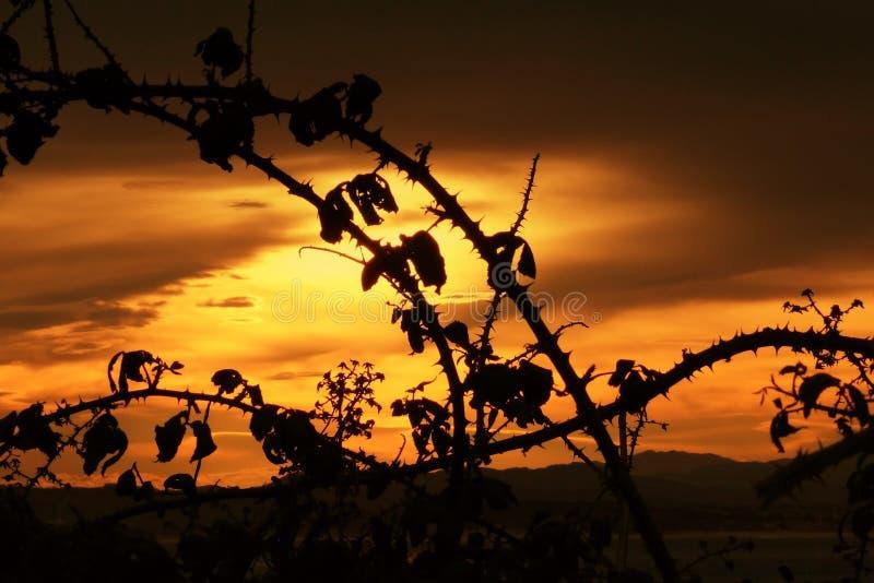 Silhuetas do luminoso do arbusto de amora-preta no por do sol imagens de stock royalty free