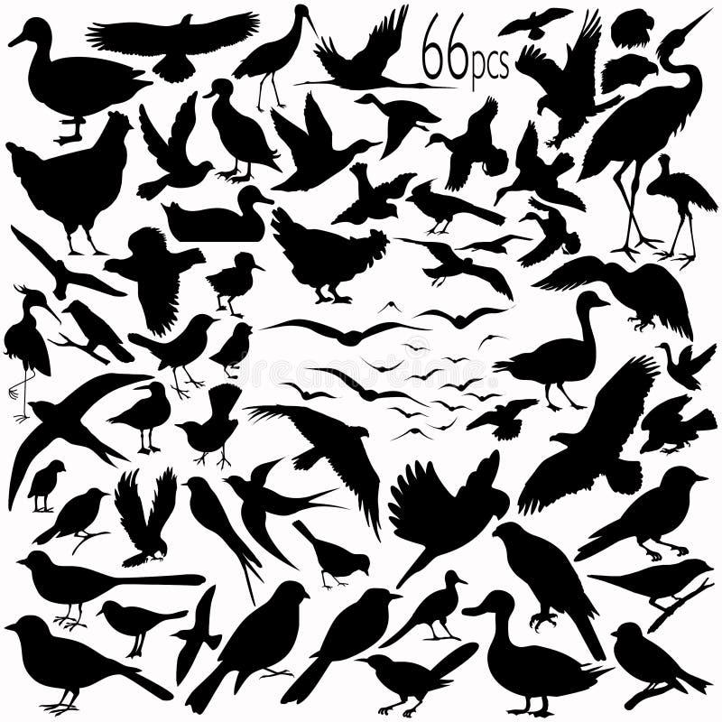 Silhuetas do pássaro ilustração royalty free