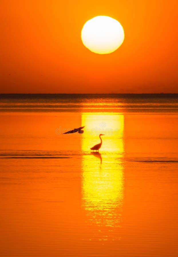Silhuetas do pássaro na prateleira do mar à vista do sol de ajuste Noite no mar imagens de stock royalty free