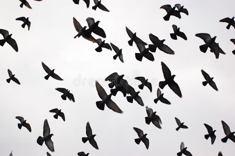 Silhuetas dos pássaros imagens de stock