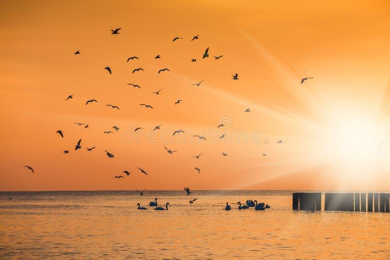 Silhuetas dos pássaros que voam acima do lago imagem de stock