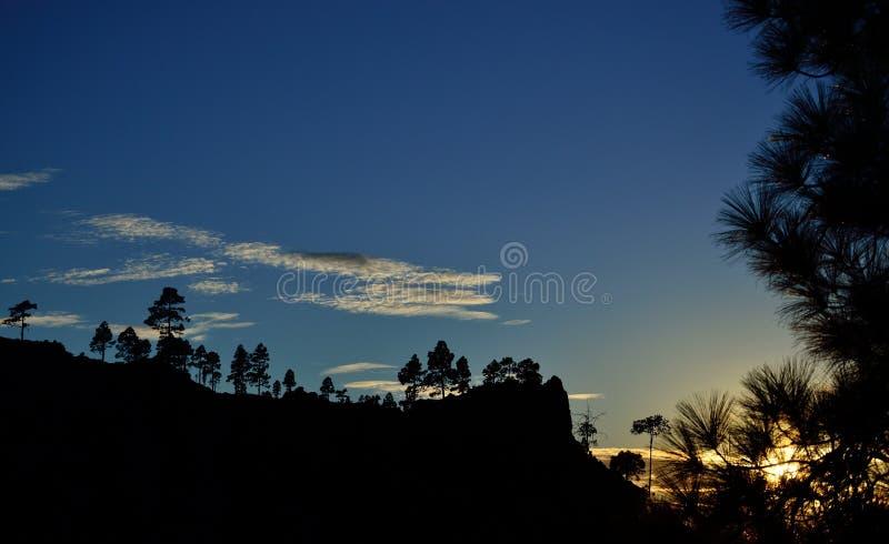 Download Silhuetas Dos Pinhos No Por Do Sol Imagem de Stock - Imagem de paisagem, ambiente: 107527257