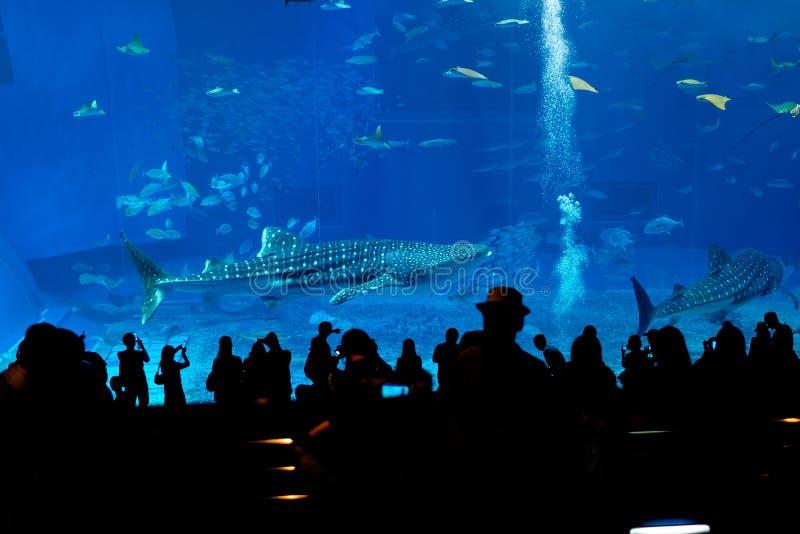 Silhuetas dos povos no aquário fotos de stock