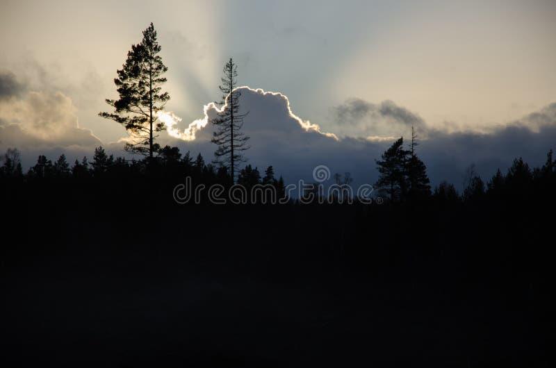 Silhuetas dramáticas da floresta e das nuvens imagens de stock
