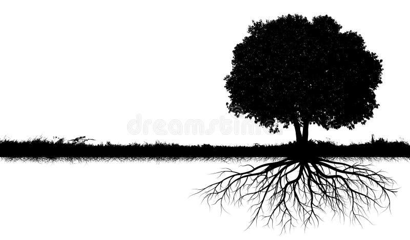 Silhuetas grandes da árvore ilustração royalty free