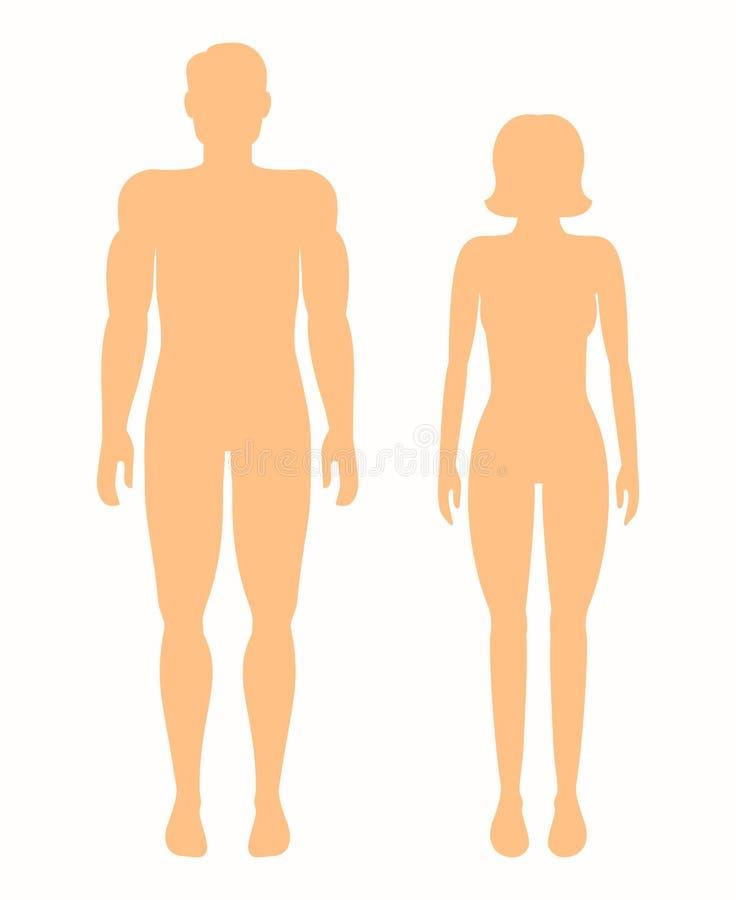 Silhuetas humanas Homem e mulher do vetor ilustração do vetor