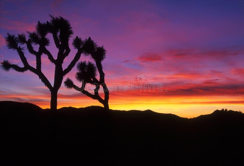 Silhuette des arbres au-dessus du coucher du soleil images stock