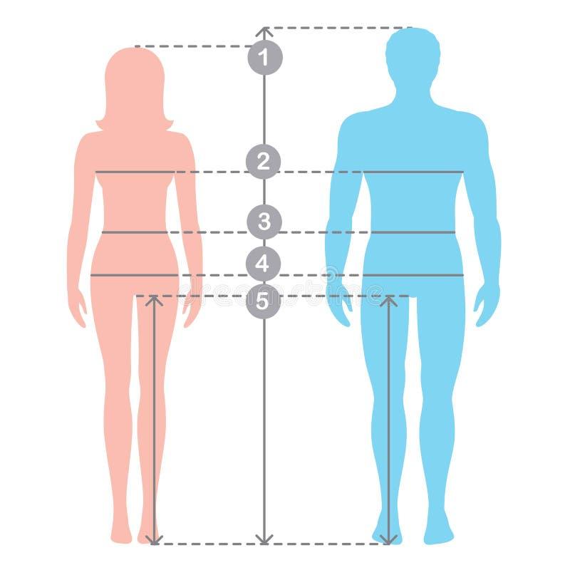 Silhuettes av den oavkortade längden för man och för kvinnor med mätningslinjer av kroppparametrar Människokroppmätningar och pro royaltyfri illustrationer