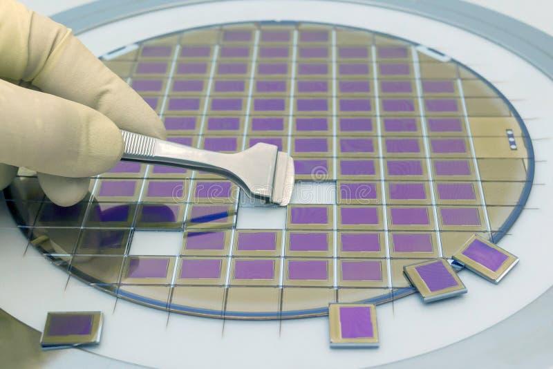 Siliziumscheibe mit den Mikrochips, geregelt in einem Halter mit einem Stahlrahmen auf einem grauen Hintergrund nach dem Prozess  lizenzfreie stockfotos