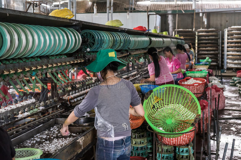Silk factory workers. Soaking cocoons to release the silk thread, Vietnam stock photo
