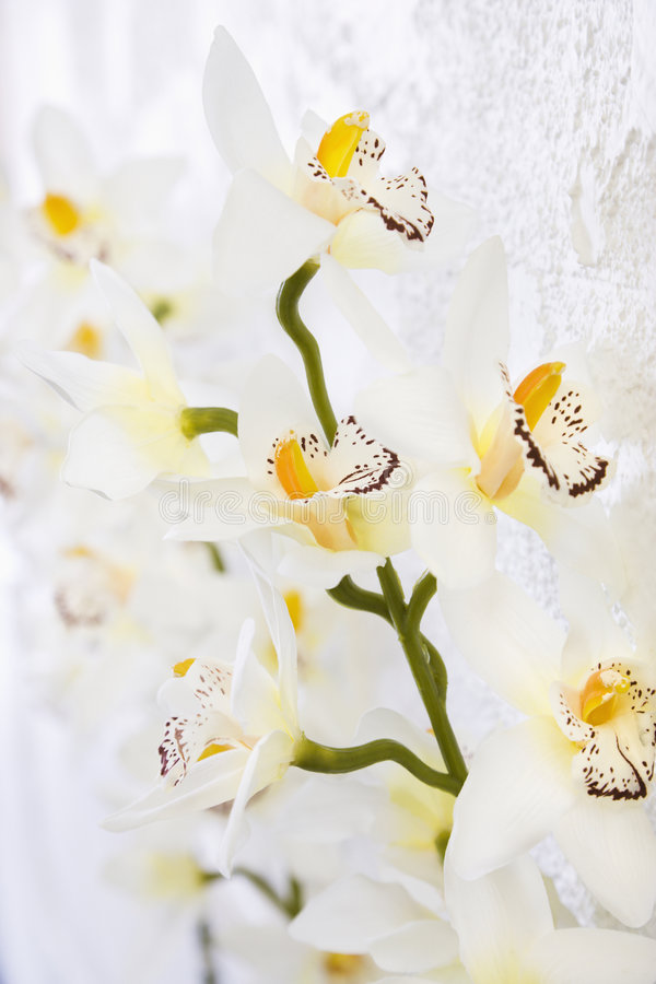 Silk orchids. stock images