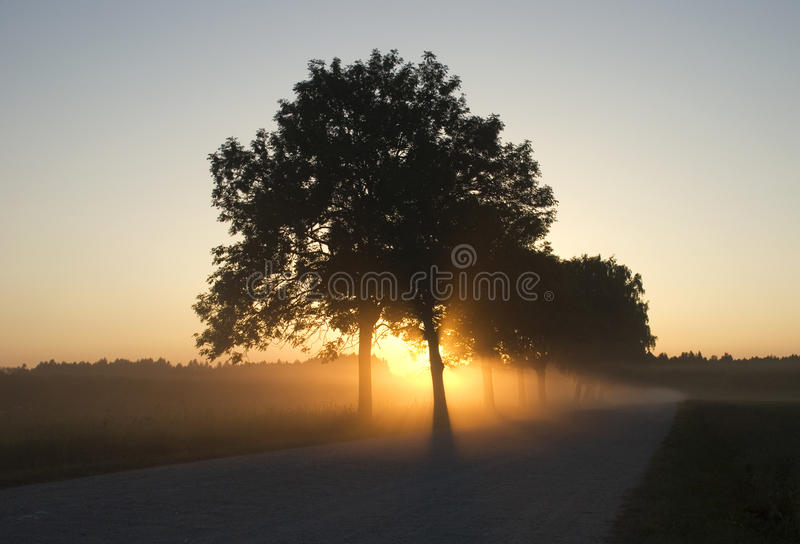 Foggy road with the sunbeams through the trees royalty free stock photo