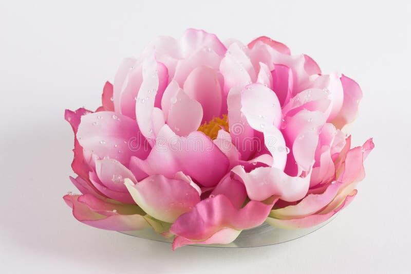 Silk waterlelie royalty free stock photo
