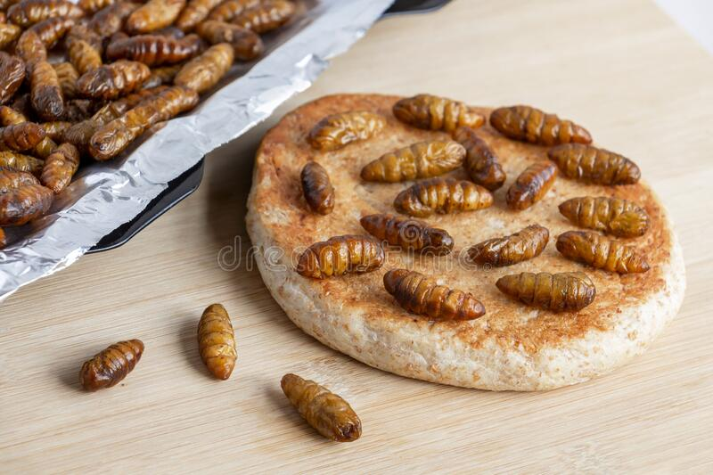 Silkworm Pupae Bombyx Mori. Food insects for eating as food. Bakery baked bread made of cooked insect meat with baking tray on royalty free stock image
