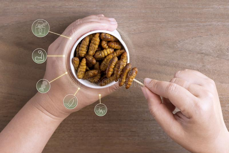 Silkworm Pupae insects for eating as food in disposable cup with icon media symbol on wood background. Chrysalis silkworm snack. Fried for take out, it is good stock photos